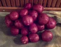 New_red_potatoes_2